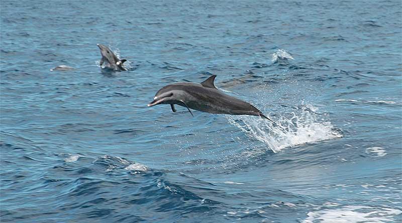 Dauphins Plongée Plaisir